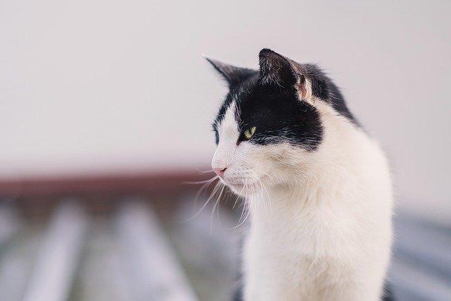 左を向く猫